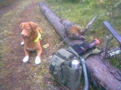 Hund och jakt