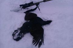 Toppfågel 2011/12