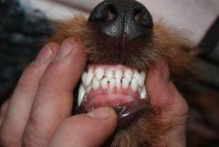 Käj-näjn..tänder.