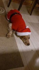 Sigfrid Santa