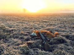 Första räven
