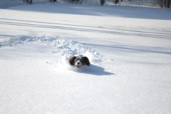 Alva i djup snö