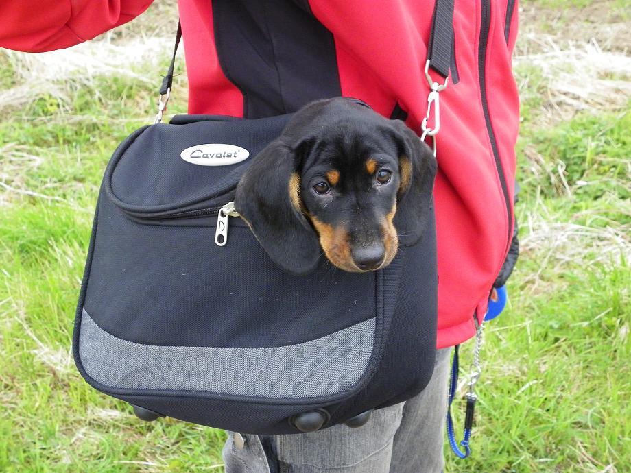 Doris i väska1.jpg