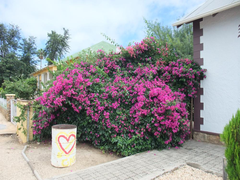 Namibia 2011 del 1 610.JPG
