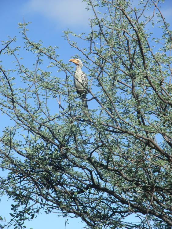 Namibia 2011 del 2 153.JPG