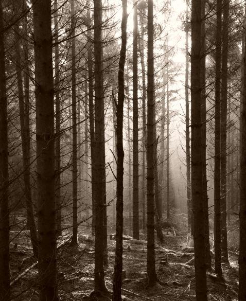 skog1.JPG.3fc16a5a8ecde92a32e323d614cb9e71.JPG