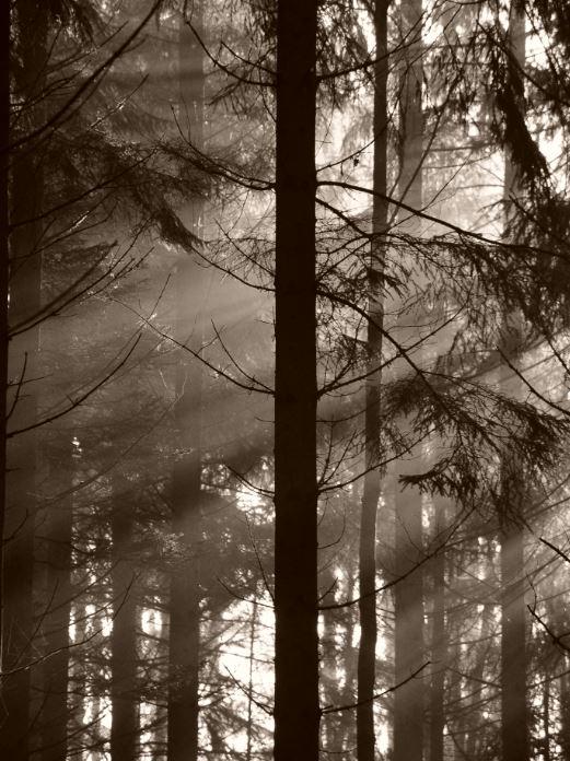 skog2.JPG.761b99008f87794a587ab223930c5dae.JPG