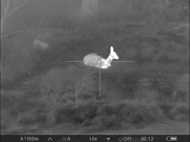 2017-04-30 Roe deer ca 20m 1.6x.jpg