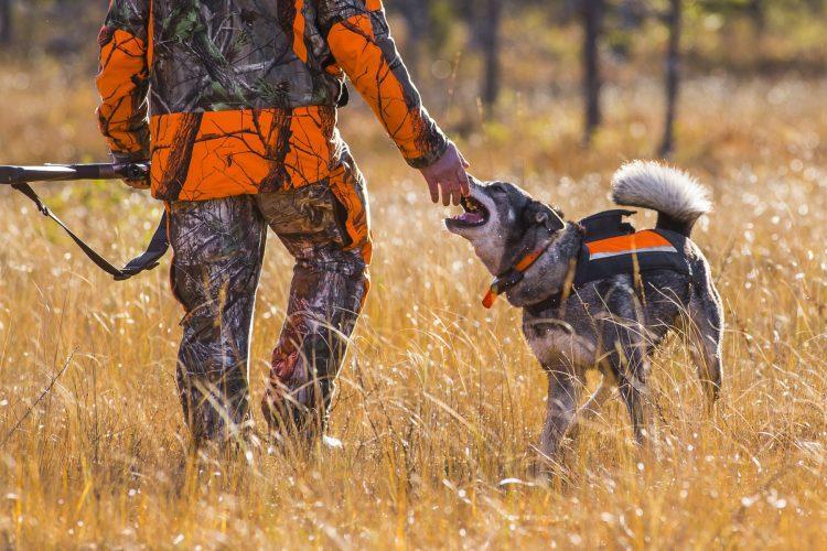 De bästa jaktklockorna