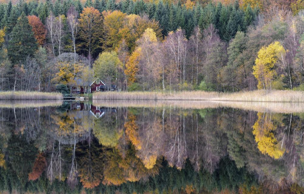 Reflections (3).jpg